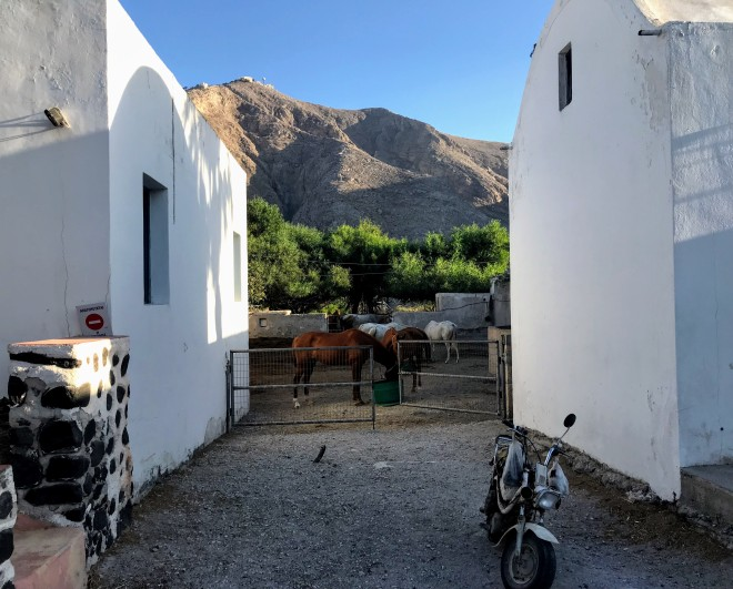 perissa horses